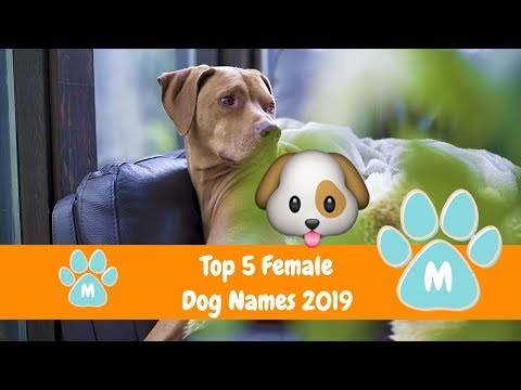 Top 5 Female Dog Names Of 2019 (Best Dog Names) 🐶