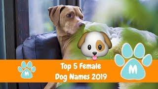 Best Dog Names 2018