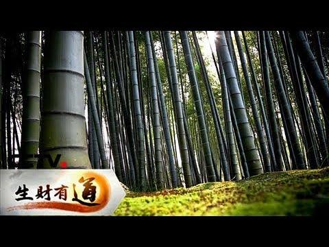 《生财有道》 20171206 江西宜丰:生态竹乡财富多 | CCTV财经