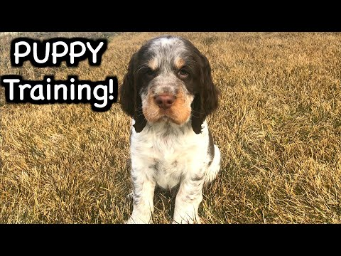 Basic Puppy Training! | Dog Training Ep 1