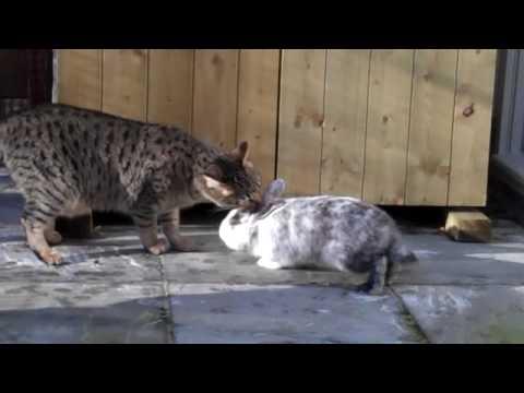 Konijntje en kat communiceren op eigen manier