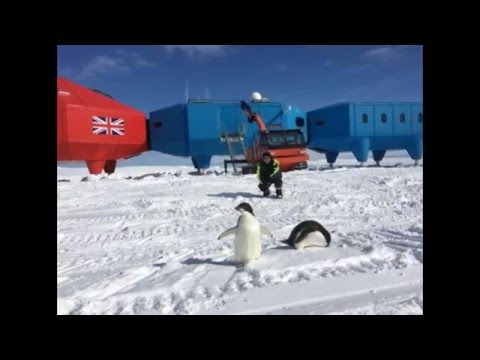 Halley VI: Dropping in on the British Antarctic Survey