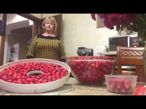 Как хранить плоды боярышника в домашних условиях