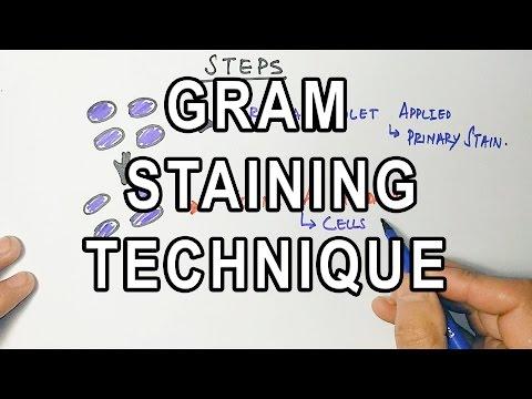 Gram Staining | Mechanism & Procedure