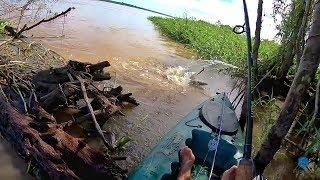 PESCA DE BAGRES!!! Isca viva para os grandes peixes de couro.