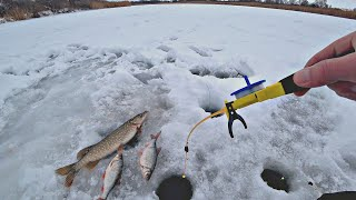 В ЭТОЙ ЛУНКЕ ТОЛСТАЯ ПЛОТВА В ДРУГОЙ ЛУНКЕ ЩУКА Зимняя рыбалка на реке
