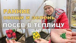 РАННИЕ овощи и зелень в теплице ☀  1. Посев и всходы / Мульча в теплице