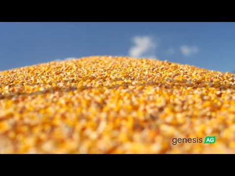 NCGA 2017 – David Hula World Record Corn Yield (542 bu/a, 2017)