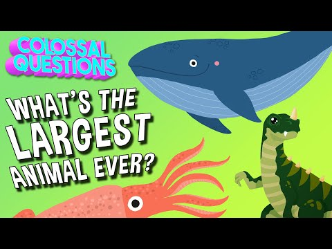 What's the Largest Animal to Ever Exist? | COLOSSAL QUESTIONS