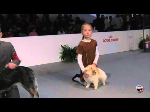 Expo Milano 2016 - Junior Handling 1