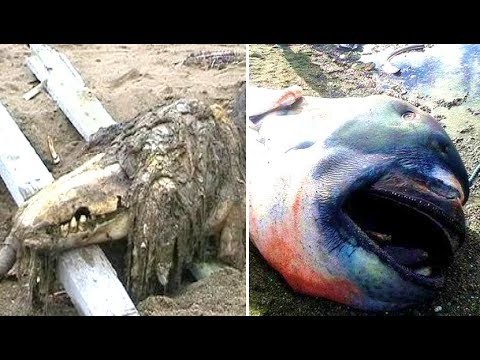 5 Animals Washed Up After Tsunamis