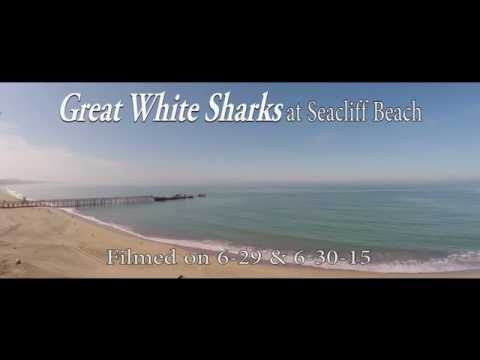 Great White Sharks At Seacliff Beach On June 28th And 29th, 2015!