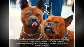Чунцин Средние породы собак