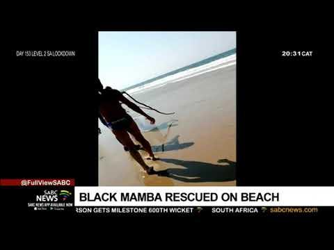 A Black Mamba goes for a swim at a Durban beach