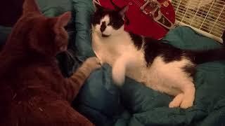 Chloe and Hailey wrestling