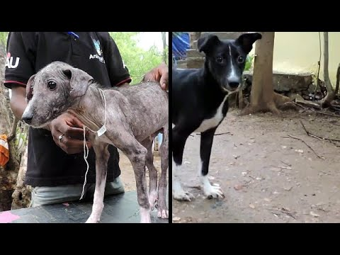 Terrified Dog Amazing Transformation