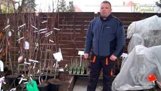 2 minuty dla OGRODU - Facet w ogrodzie o drzewkach owocowych.
