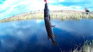 Рыбалка на Днепре, а на следуйщий день поехали под Ирпень