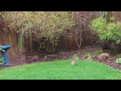 Кролик в гостях 15.04.18
