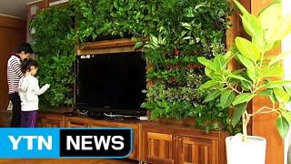 집안 미세먼지 착 달라붙는 식물 4가지 / YTN