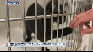 Cats rescued from Hurricane Sally looking for forever homes