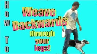 How to Teach Your Dog to Back Up and Weave Backwards Through Your Legs