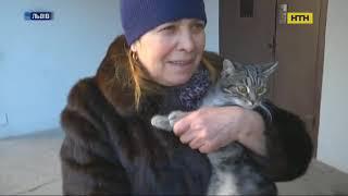 У Львові підлітки викинули кота з вікна