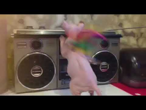 Dewin from Bambielf Mystery*LV | Elf cat, ELF w 61 | Video #3