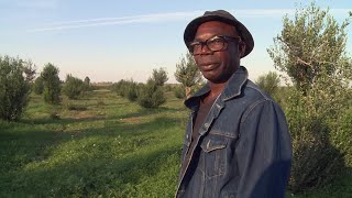 Italiens Sklavenmarkt: Die Slums der afrikanischen Erntehelfer