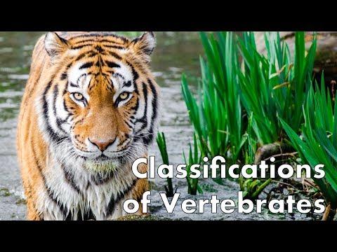 Classifications of Vertebrates