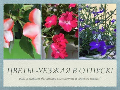 Как сохранить цветы уезжая в отпуск?