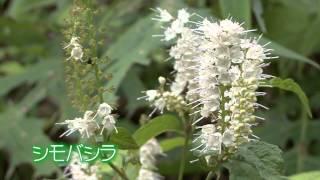 東京の自然環境(1)<利用する>