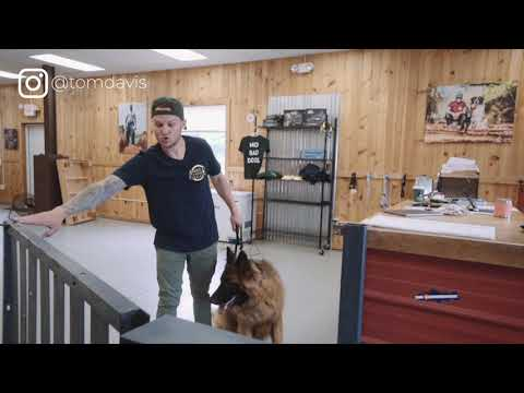 How to stop your dog from running out the door-How to build a better relationship with your dog