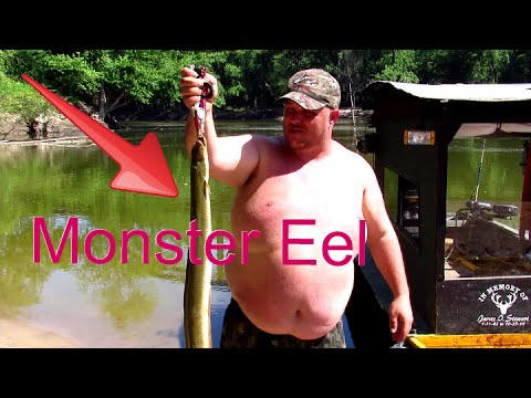 River Monster American Eel 🎣 Indiana's Record Eel Caught & Release  👀