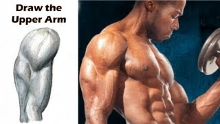 How to Draw the Upper Arm (Biceps Triceps Deltoids) Step by Step