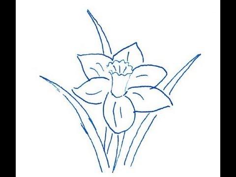 Narcissus flower. How to draw a easy? (Цветок Нарцисс. Как нарисовать просто?)