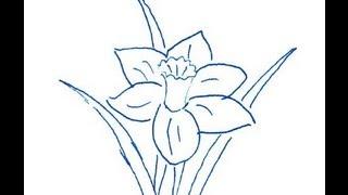 Narcissus flower. How to draw a easy? (Цветок Нарцисс. Как нарисовать просто?)(Рисовать это очень интересно и очень просто. Любимый персонаж мультфильма может оказаться у вас на листе...., 2013-08-14T08:15:18.000Z)