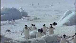 Виктор Лобода. Пингвины..wmv