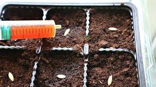 Посадите этим способом огурцы на рассаду в апреле и собирайте зеленцы ведрами летом!