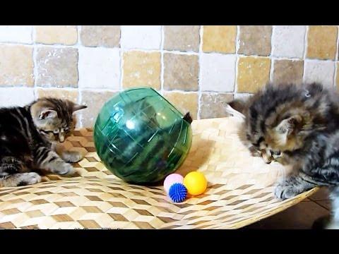 Balls and Furry Balls ( Too Cute Kittens )