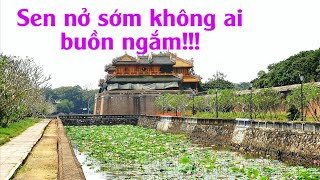 Mùa sen đến sớm ở quanh Hoàng Thành Huế   Lequang Channel