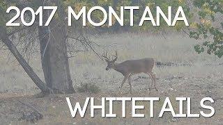 2017 Montana Public Land Whitetails - #WiredToHuntWeekly 22