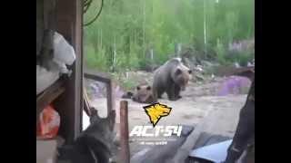 熊が迫りくる時は本当に怖いです。過去人が殺された事もありましたね。