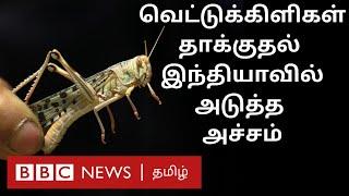 Locust Attack : இந்தியாவுக்கு அடுத்த பிரச்சனை ஆரம்பம்