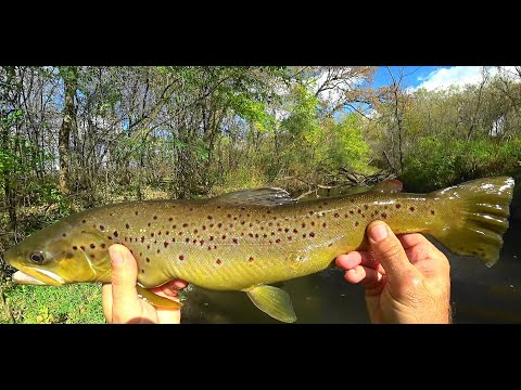 Wisconsin Trout Fishing - 10/13/2020
