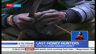 Last Honey Hunters: How the Ogiek still harvest honey using old-fashioned way to date