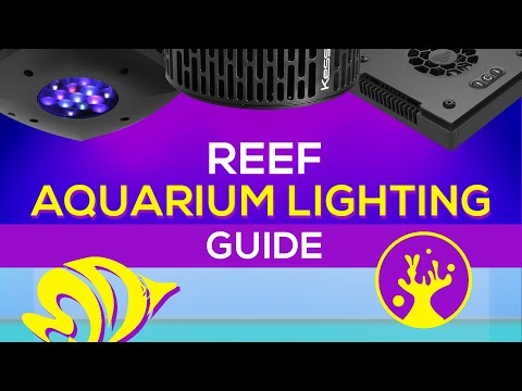 Reef Aquarium Lighting Guide: What Is The Right PAR For Vibrant Coral Coloration And Growth?