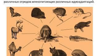 Главные направления Эволюции  Биологический прогресс и регресс
