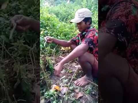 Bahasa Madura Campur Indonesia Cara Menangkap Burung - YouTube