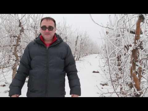 PSSS Padinska skela izmrzavanje voćnjaka  Dejan Marinkovic